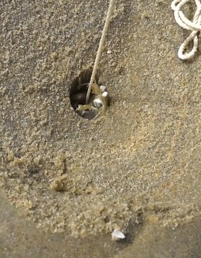 Fishing Shrimp on the Sand #sea #foruyou #homesea #catching #shrimp tiktok