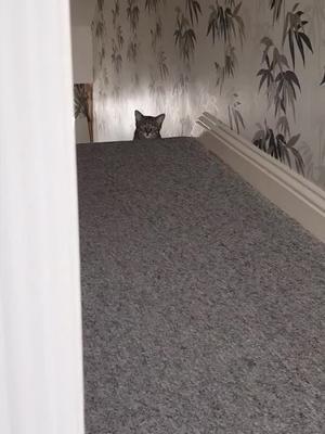#cats #funnycatvideo #funny #catvids #catsoftiktok #funnycat #cat #catvideo #cutecats of tiktok cat video