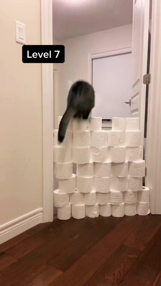 Cat Olympics in Quarantine 🐱 #cats #catsoftiktok #animals #kitty #catchallenge #levelup #levelupchallenge of tiktok tiktok tiktok tiktok tiktok