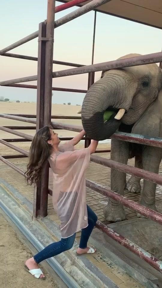 #elephant #watermelonchallenge #shqiptarë #albaniangirl #mydubai tiktok
