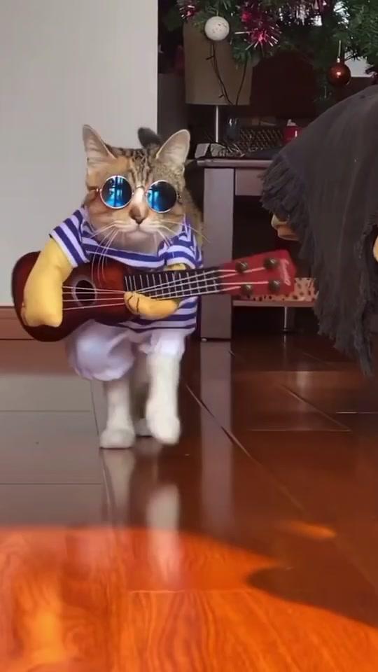 #fashion #cat #kitten #cats #catlover #mycat #catchallenge #animal #animallover #animals #disney #billieeilish #tiktok #tiktokindia #expression tiktok