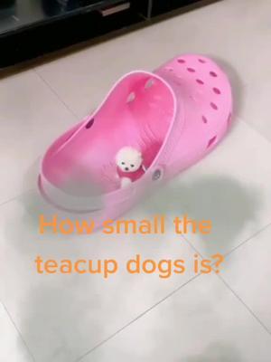 🌝🌝🌝Do U know it?#animal #pet #fyp #cute #viral #tiktok #dog TikTok