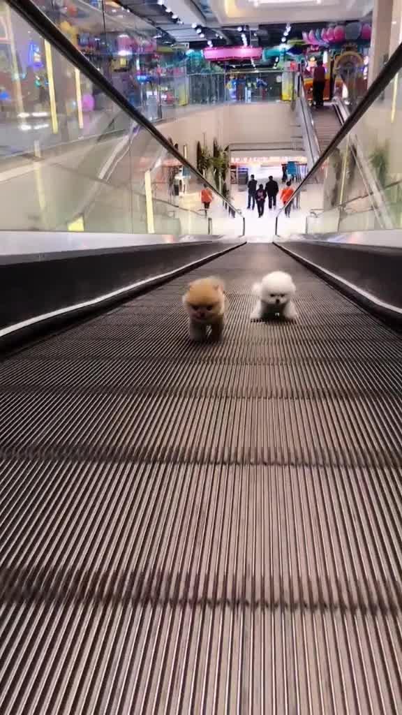 đáng yêu quá đi mất thôi 2 em cún con này #cute #dog #pet #puppy #foryoupage tiktok