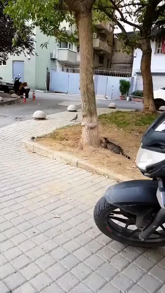 Sondaki kediye gülmekten öldüm 😂 #kedi #tiktok #trending #fly tiktok