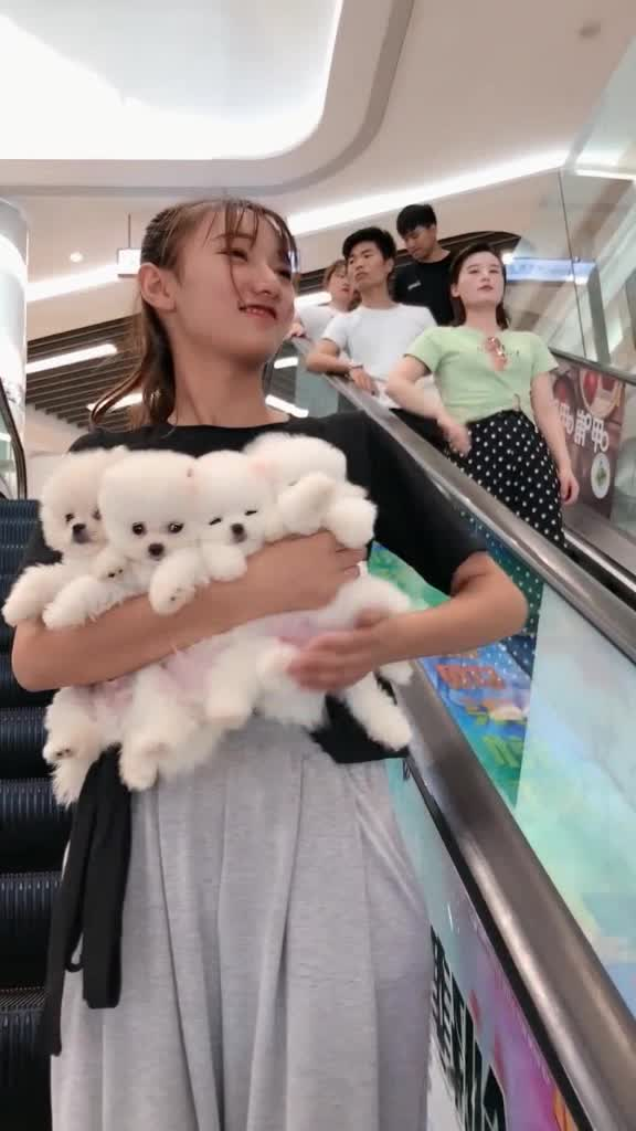 tặng em cún cho các bạn yêu quý cún #cute #dog #pet #puppy #foryou #fyp tiktok