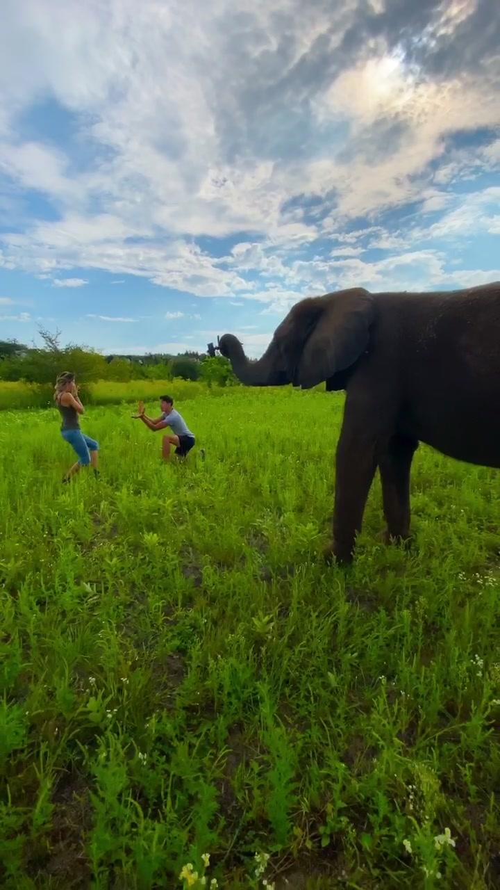 Kimba tried recording us 😂 wait for it 😂 #Elephant #Love 🖤 @rene_casselly tiktok