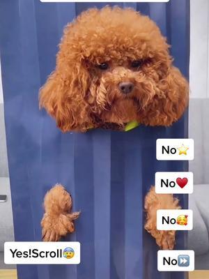 Do you hate me? I'm really no bad girl😭😭😭#dog #puppy #dogtiktok #doglover #tiktok #pet #fyp #viral #provewhatspossible