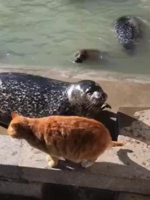 #Cat : Shut up you sucker. #fyp #hilarious