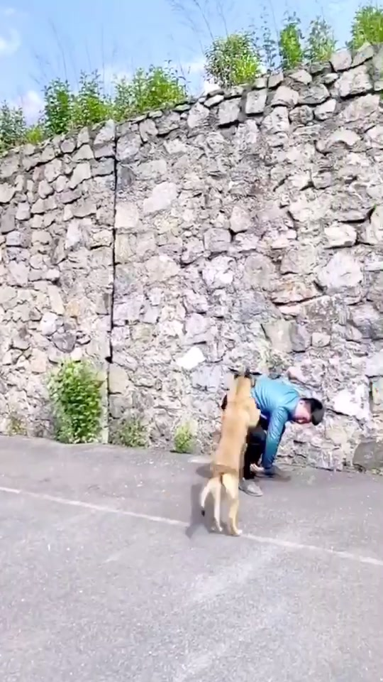 Damn that dog can fly 😱😱 #KeepingItCute #dog #flyingdog #flyingdogchallenge #jumphigh #fypchallenge of play tiktok