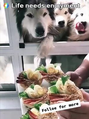Do They look happy #dog #homemade #dogsoftiktok #usa #newyork #zdhd #foodie #menu