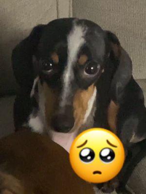 🥺 #dogoftiktok #dog #guiltyaf