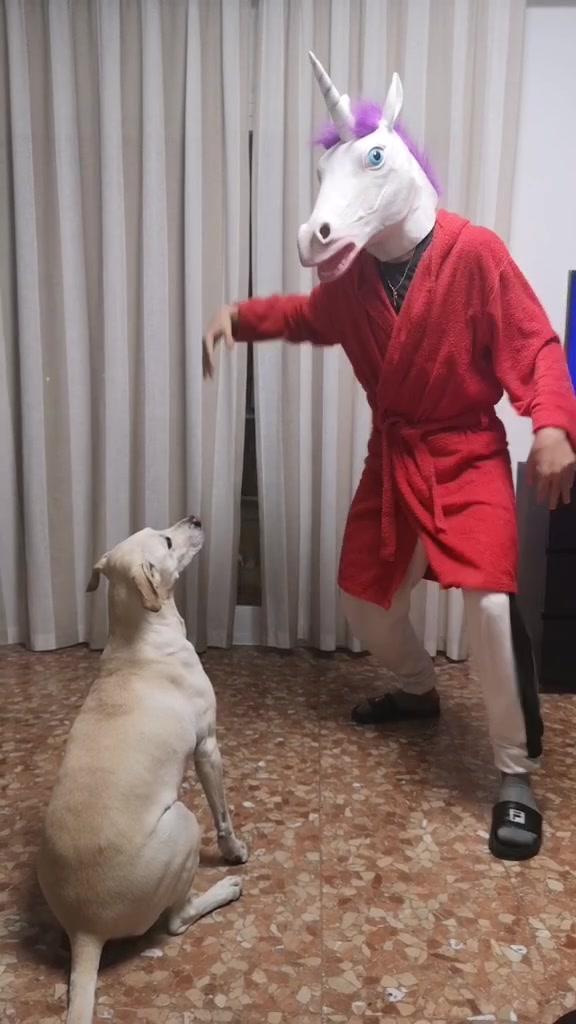 #dog #fun #funnydog #curiquitacachallenge #curiquitacachallenge tiktok