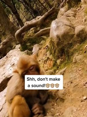 LOL🤣🤣🤣, I watched this video five times, and you?#LittleBitFancy #foryou #monkey