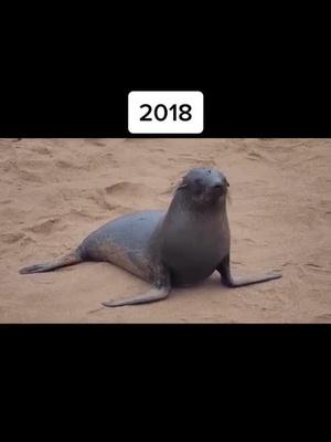 #animals#2021 tiktok